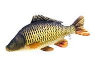 Kdyby ryby nebraly